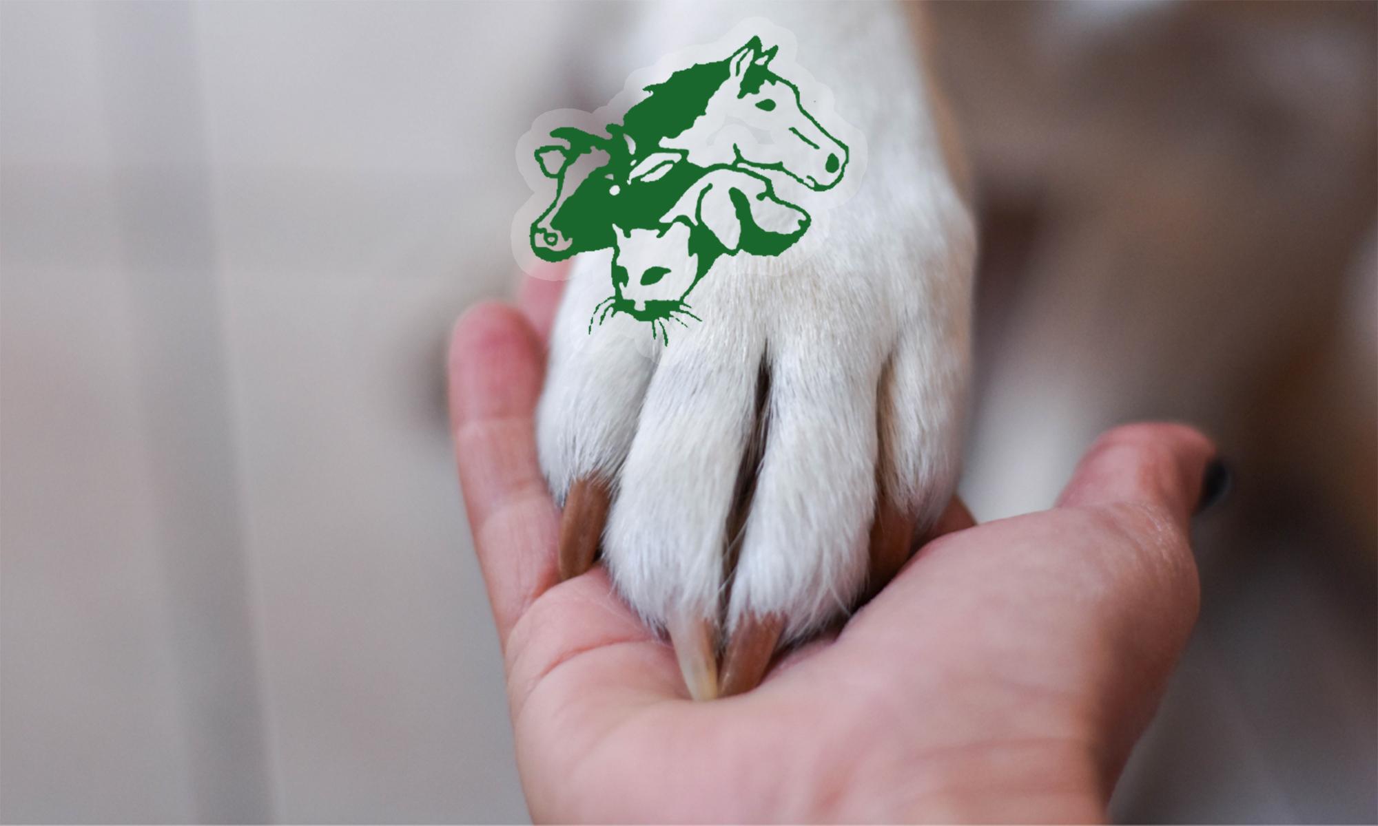 Welkom bij dierenartsenpraktijk Roden